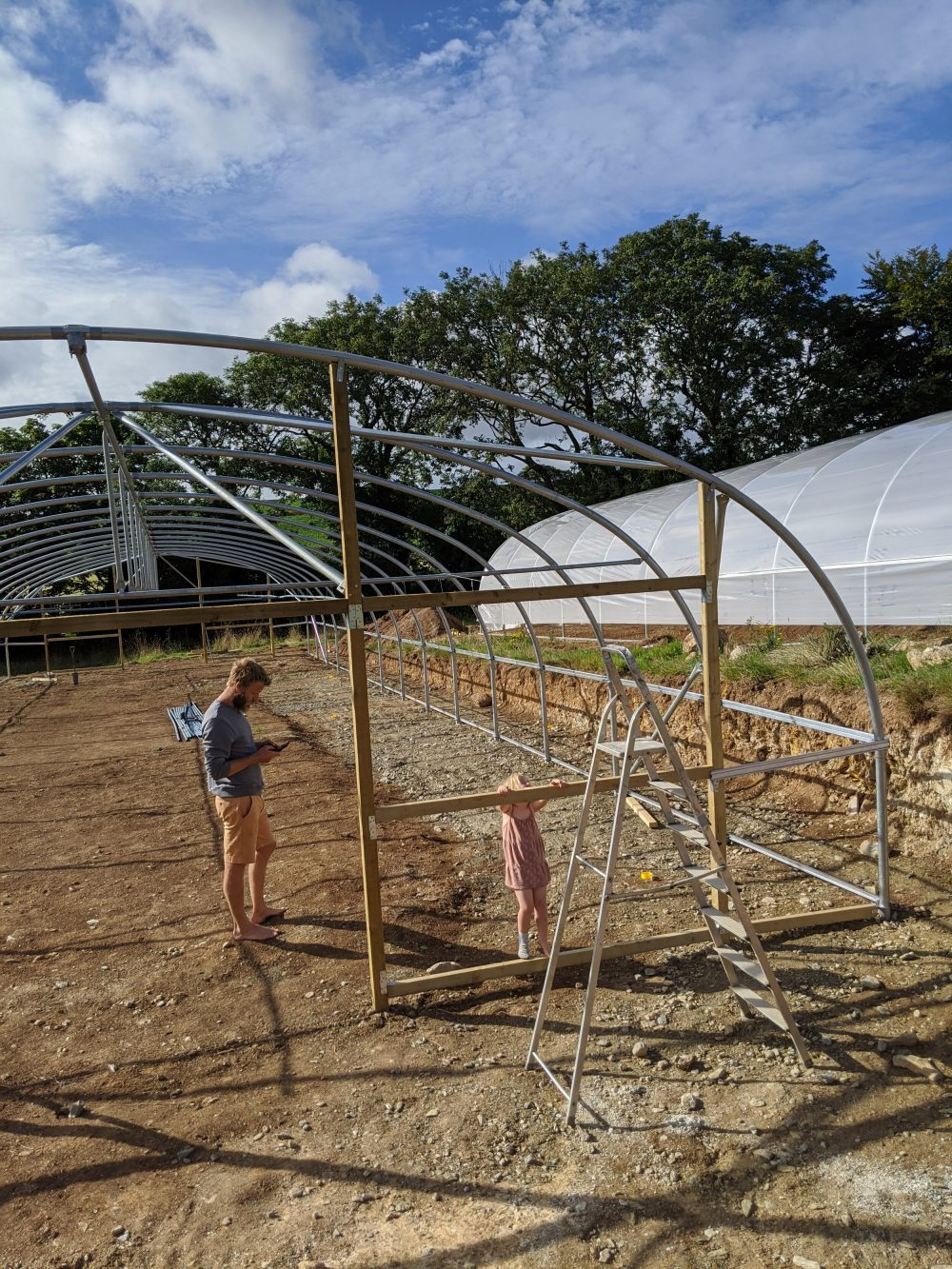 The polytunnels, with Clover for scale