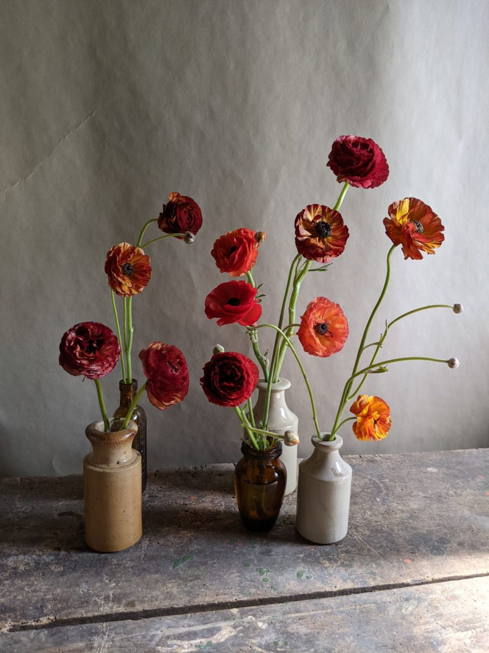 These fiery ranunculus are a great example of colour variation within the same variety