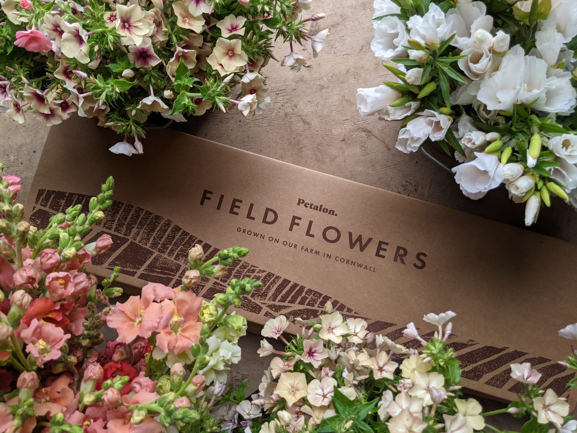 Field Selection Box