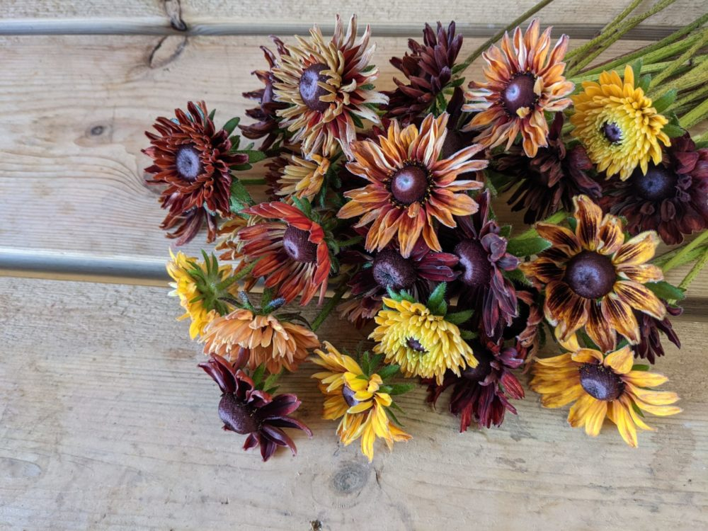 Beautiful rudbeckia that sadly we won't be growing again next year